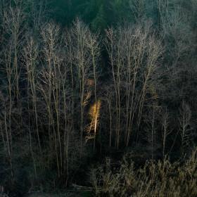 002_francesca-catastini_visione_trees_fire_light_wood